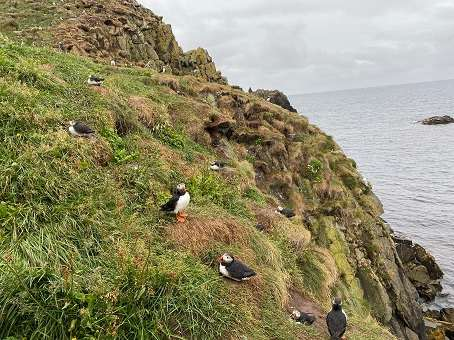 Seeing puffins in Iceland