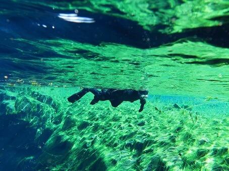 Underwater view in SIlfra, Iceland